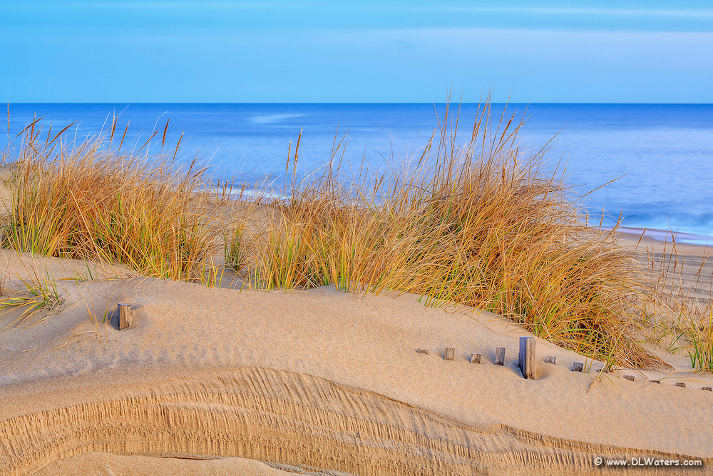 Sea oats at sunrise along the Nags Head  beach on the Outer Banks of NC.