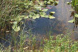 Everglades National Park - Wetland Marsh Environment