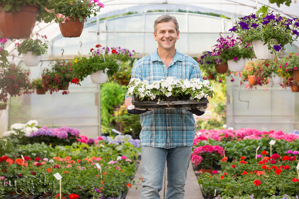 Portrait of happy gardener carrying crate with flower pots in greenhouse