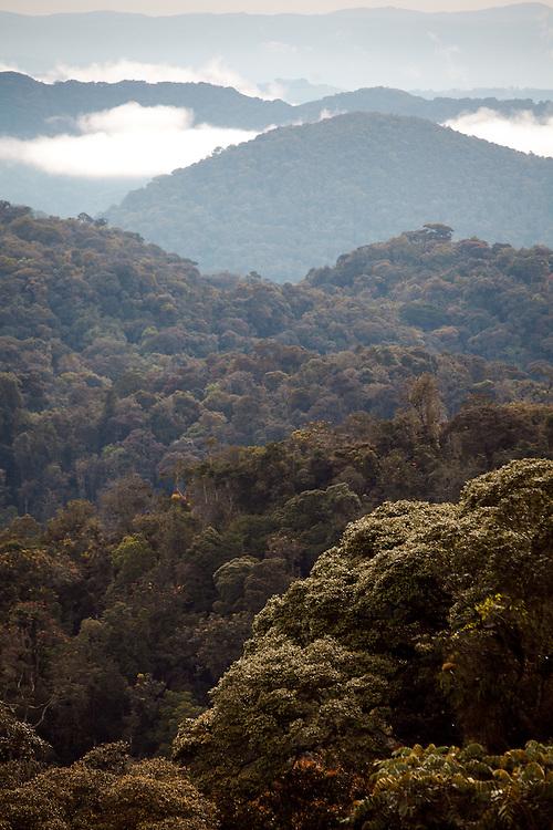 Nyungwe Forest canopy, Rwanda