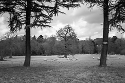 Rothley, Leicestershire, England.<br /> Photo: Ed Maynard<br /> 07976 239803<br /> www.edmaynard.com