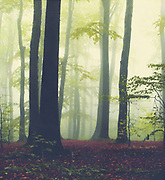 Misty forest on a fall day