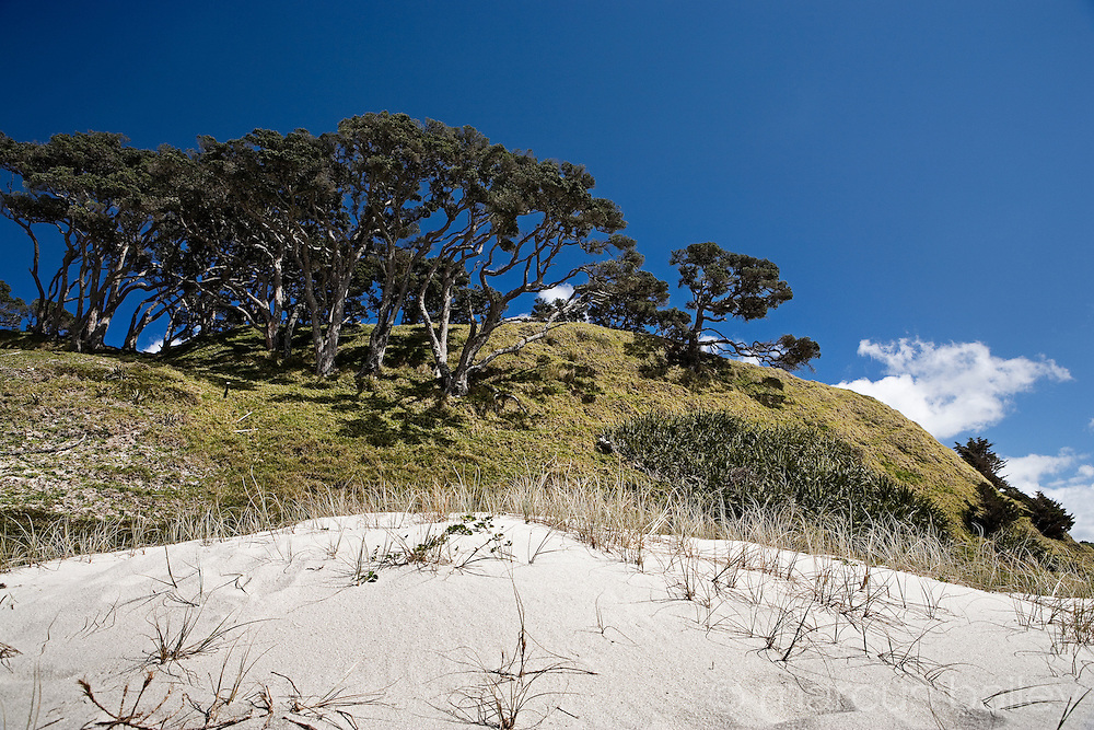 white sand dunes against a backdrop of green hills, trees and a stunning blue sky at pakiri beach, northland, new zealand