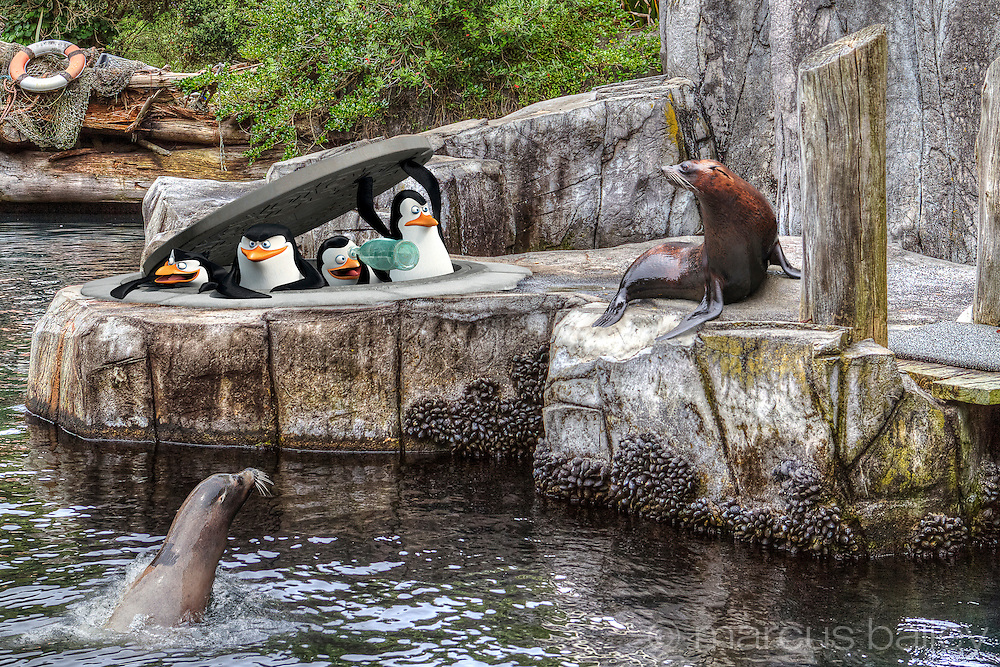 Penguins of Madagascar promotion at Auckland Zoo New Zealand