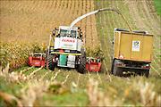 Nederland, Groesbeek, 30-9-2016 Maisoogst. Foto: Flip Franssen