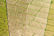 Patterns in a mechanically harvested rice or paddy field.