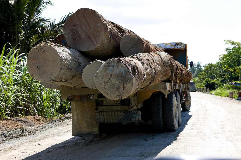 Illegal logs being transported near the 22,000 hectare palm oil plantation of the Sinarmas Group in Papua, Indonesia, Sept. 4, 2008. .Daniel Beltra/Greenpeace