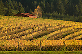 Oregon - Chehalem winery