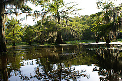 Freshwater Lake Environment  - Late Summer