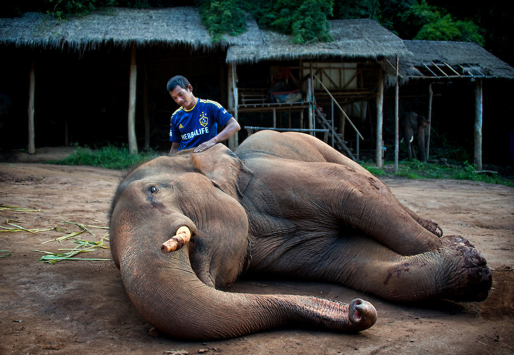 A mahout cares for his elephant at Anantara Resort, Golden Triangle, Thailand.