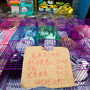 Caged rabbits are displayed for sale on the sidewalk in Old Town Shanghai China.