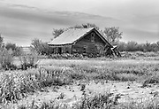 Abandoned prairie homestead near Vulcan Alberta.