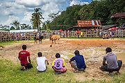 03 NOVEMBER 2012 - HAT YAI, SONGKHLA, THAILAND:   Members of a bullfighting team watch their bull fight at the bullfighting arena in Hat Yai, Songkhla, Thailand. Bullfighting is a popular past time in southern Thailand. Hat Yai is the center of Thailand's bullfighting culture. In Thai bullfights, two bulls are placed in an arena and they fight, usually by head butting each other until one runs away or time is called. Huge amounts of mony are wagered on Thai bullfights - sometimes as much as 2,000,000 Thai Baht ($65,000 US).     PHOTO BY JACK KURTZ