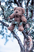 a teddy bear is hanging in a tree