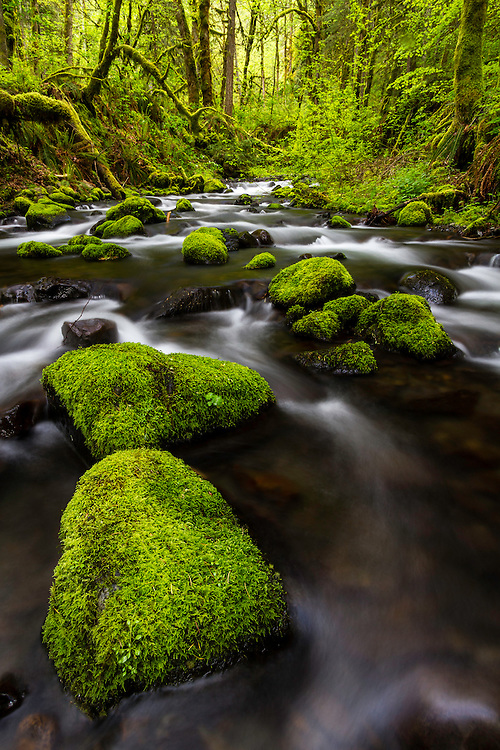 The boulders of Gorton Creek in the Columbai River Gorge are endless and green as ever.