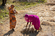 Women agricultural workers at Jaswant Garh in Rajasthan, Western India