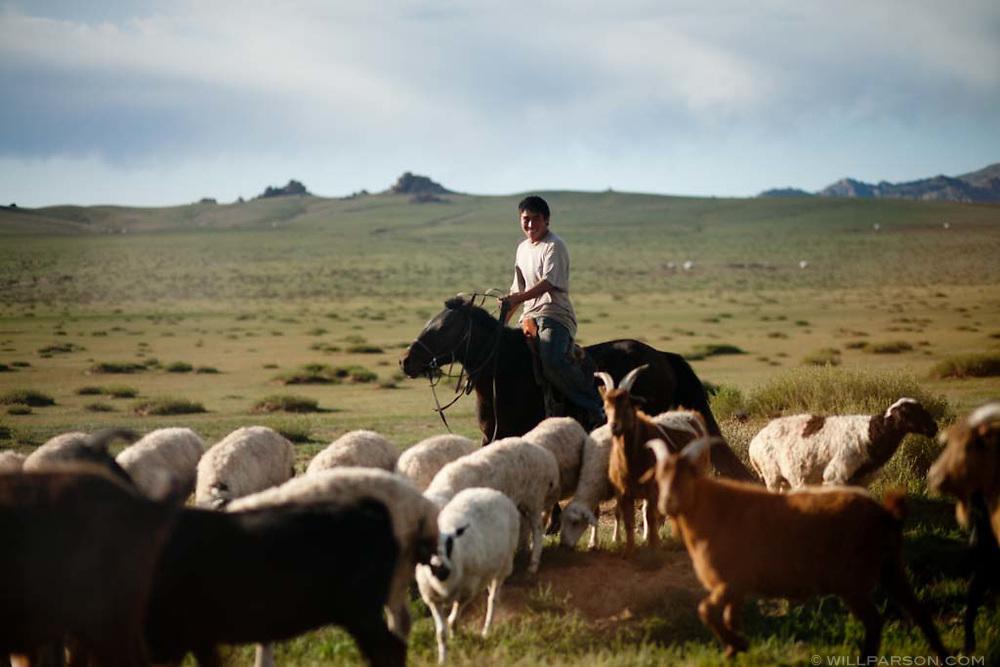 A man herds goats in Övörkhangai Province, Mongolia.