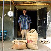 Organic coffee farming, Uganda