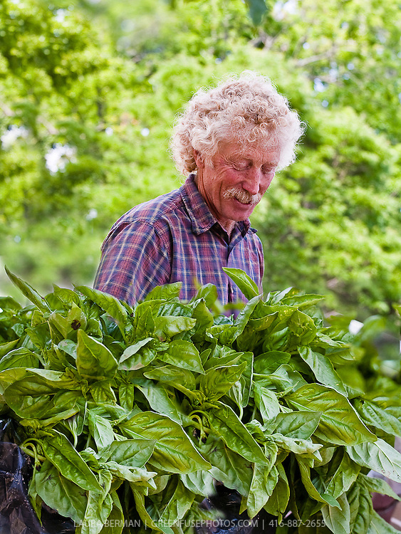 Organic farmer Ted Thorpe with his locally grown Genovese basil at a farmers market.