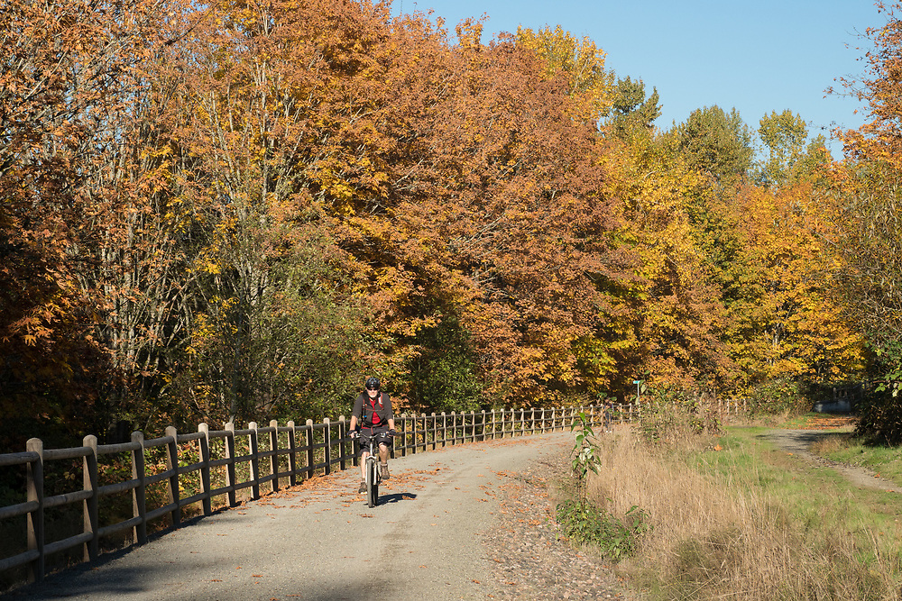 North America, United States, Washington, Kirkland. A man rides a mountain bike along the Cross Kirkland Corridor, a former railroad line converted to a trail for walking and bicycling.  MR