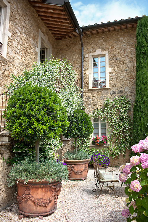 Courtyard area including large terracotta containers planted with standard Laurus nobilis (bay) trees, Convolvulus cneorum and Petunias. Walls covered by a white flowering Trachelospermum jasminoides (Star jamsine).<br /> <br /> Borgo Santo Pietro, Siena, Tuscany, Italy<br /> <br /> &copy; Andrea Jones/Garden Exposures Photo Library