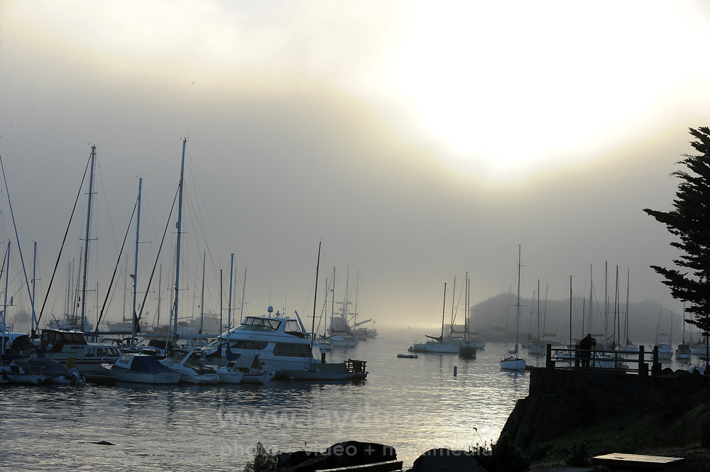 On November 13th, 2016, early-morning fog blankets sailboats in Monterey Bay.