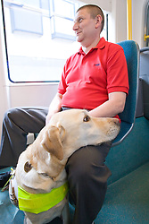 Vision impaired man with guide dog travelling on a tram together,