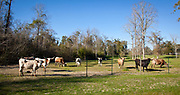 The country of home of Jennifer and Fred Heebe near Talisheek, Louisiana