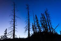 Cedar Breaks National Monument, Utah, USA