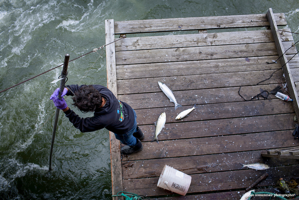 Indian Fishers at Cascade Locks near Portland, Oregon fish for Salmon on platforms that have been in their family for generations.  The Indians are the only peoples with permits to fish this way on the Columbia River.  They sell fresh Salmon to buyers from the area.  They use traditional dip net and gill net fishing.