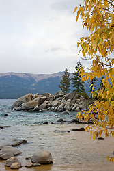 """Sand Harbor in Autumn"" - This cottonwood tree was photographed at Sand Harbor, Lake Tahoe."