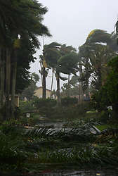MIAMI, Sept. 10, 2017  Trees and branches are seen on a street after being torn down by strong winds as hurricane Irma arrives, in Miami, Florida, the United States, on Sept. 10, 2017. Category Four Hurricane Irma on Sunday morning made landfall in the Florida Keys with gust wind speed of 171 km/h, according to the National Hurricane Center  (srb) (Credit Image: © Yin Bogu/Xinhua via ZUMA Wire)