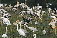 Birds at Bharatpur, India