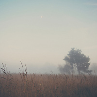 a tree surounded by fog stands in a field full of tall grass the moon visable in the winter sky