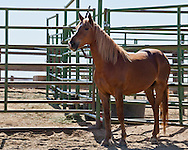 Photos of Lifesavers Wild Horse Rescue October 22, 2013