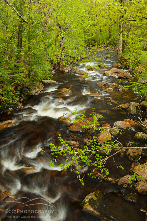 Sping stream in Vermont's Green Mountains. Appalachian Trail.