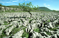 Limestone Pavement near Ingleborough, Yorkshire, UK