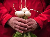 Man's hands holding white Hakurei turnips grown in home garden, Kodiak Island, Alaska