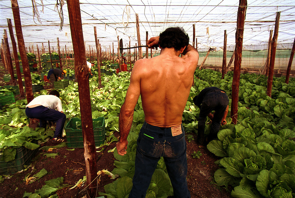 Immigrants, many of whom enter the country illegally, working as low paid, itinerant laborers in thousands of hothouses across Spain's southern Andalucia region. The region produces vegetables and fruit for the European Union..El Ejido, Spain. 12/02/2000.Photo © J.B. Russell