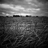 Straw, Occold, Suffolk 2010