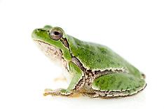 Amphibians - Most popular images