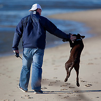A playful dog jumps up toward his owner as they walk down a bayside beach at Sandy Hook National Park New Jersey