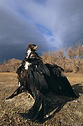 Golden eagle on rabbit<br /> (Aquila chrysaetos)<br /> used by Kazakhs for hunting<br /> Western Mongolia