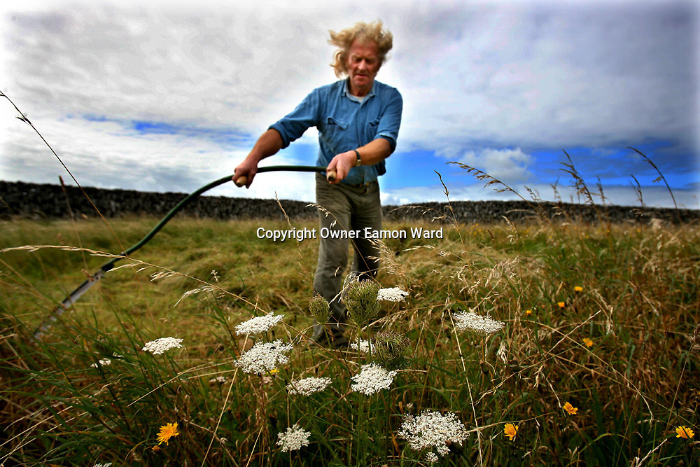 Paraic Poil Saving Hay in the traditional method on Inisoir ,Aran Islands,Ireland...Photograph  by Eamon Ward