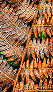 Alberto Carrera, Crystal Nature Exhibition, Sierra de Guadarrama National Park, Guadarrama Mountains, Segovia, Castilla y León, Spain, Europe