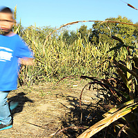 Adam Robison | BUY AT PHOTOS.DJOURNAL.COM<br /> Luke Webb, 4, races through the corn maze as he tries to figure his way out.