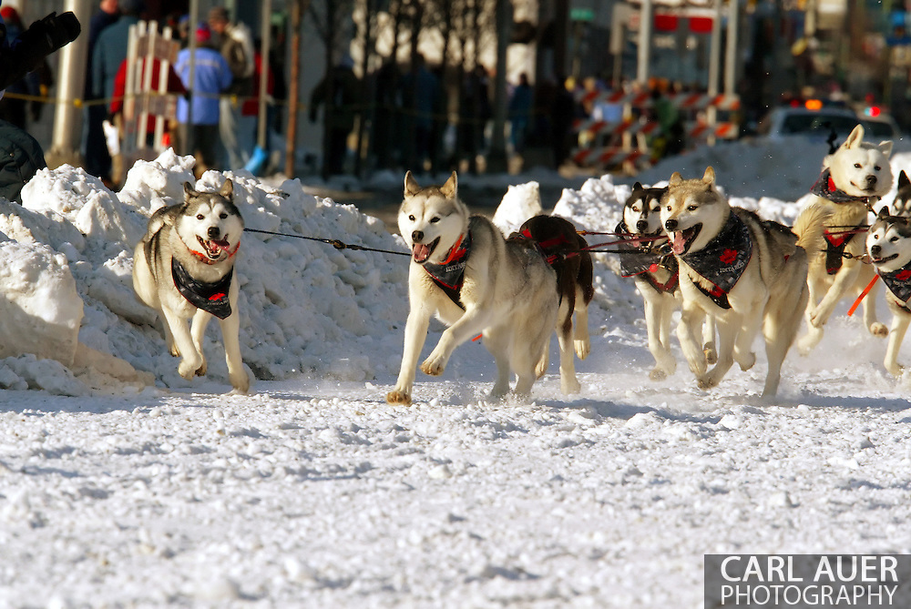 3/3/2007:  Anchorage Alaska -  Showing their excitment to be running, the lead dogs of Veteran Karen Ramstead of Perryvale, Alberta Canada pull all over 4th Avenue during the Ceremonial Start of the 35th Iditarod Sled Dog Race