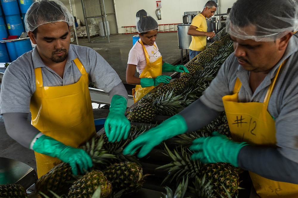 Workers prepare pineapples to be exported, from a private industrial farm in Costa Rica on January 13, 3014. Environmentalists claim the pineapple industry is contaminating the environment and local water supplies.