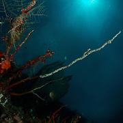 Dive Spot: Gorgonian Passage