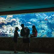 Three visitors looke through underwater aquarium showing some of the local marine life and coral reefs at Xcarat Maya theme park south of Cancun and Playa del Carmen on Mexico's Yucatana Peninsula.